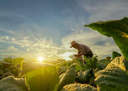 L'agricoltura guarda al futuro